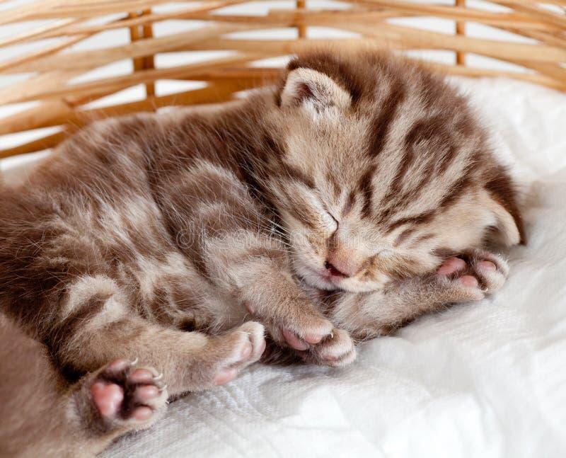 Gatito divertido del animal doméstico del gato del bebé el dormir fotos de archivo
