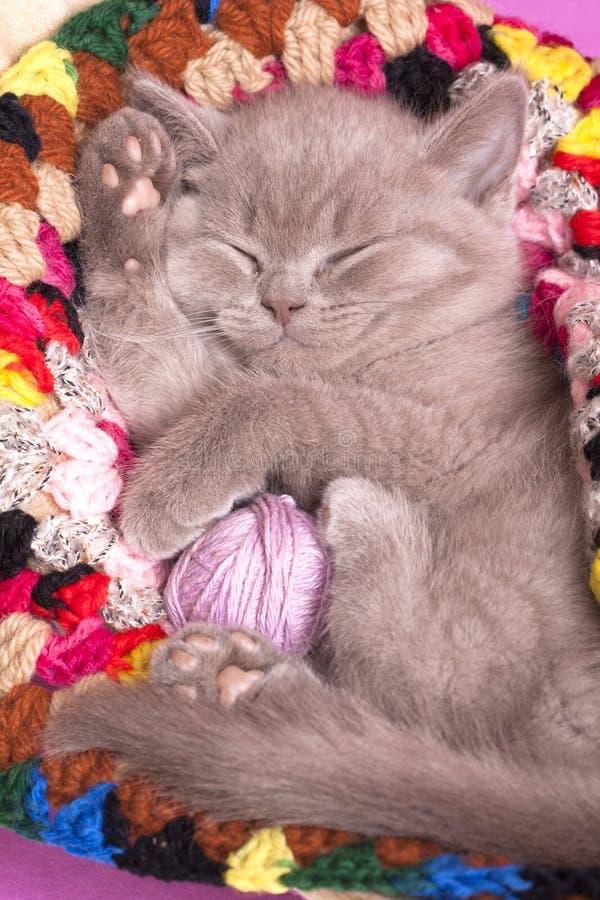 Gatito el dormir fotografía de archivo