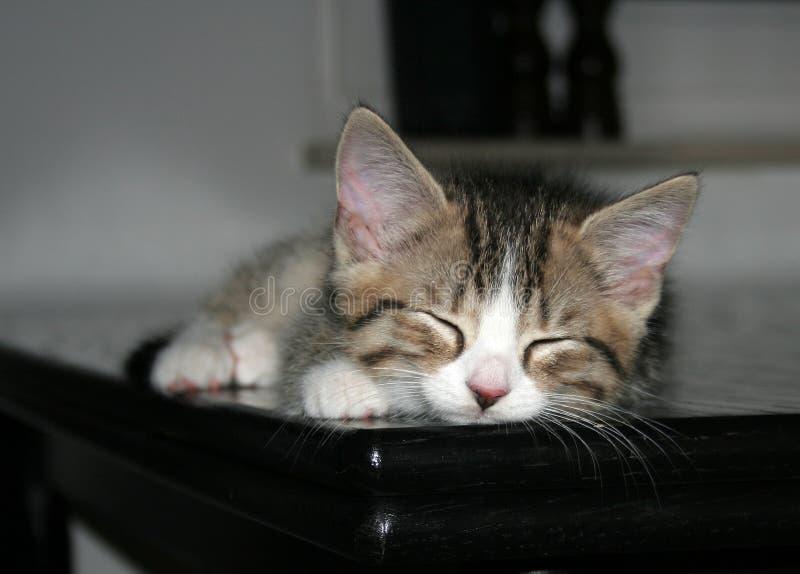Gatito el dormir imagen de archivo libre de regalías
