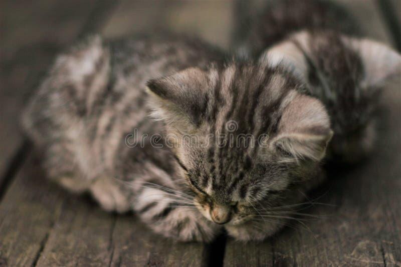 Gatito el dormir fotos de archivo