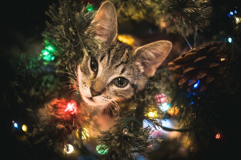 Gatito en árbol de navidad foto de archivo libre de regalías