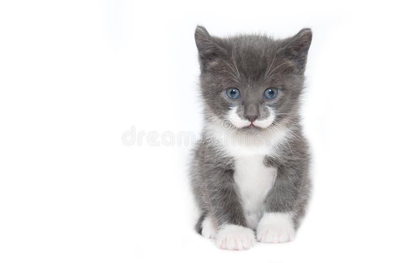 Gatito en blanco fotos de archivo