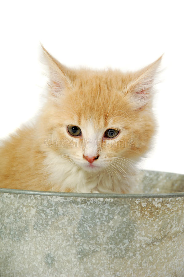Gatito en cubo fotos de archivo libres de regalías