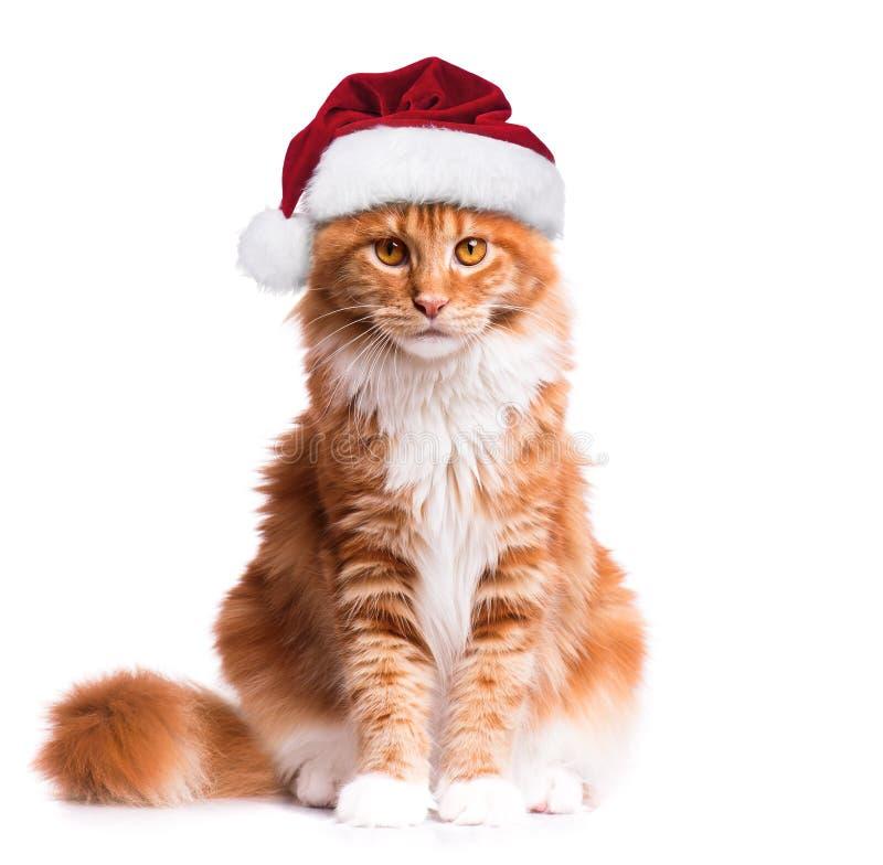 gatito en el sombrero de Papá Noel fotografía de archivo