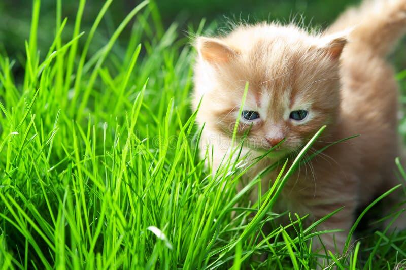 Gatito en hierba verde imágenes de archivo libres de regalías