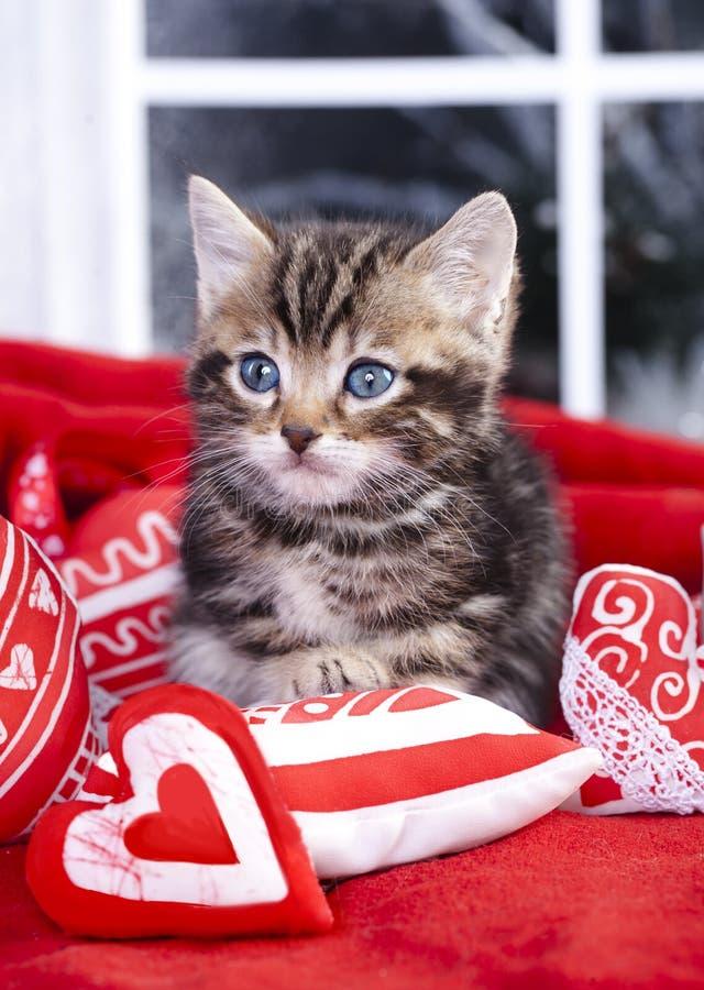 gatito en la almohada en forma de corazón roja foto de archivo libre de regalías