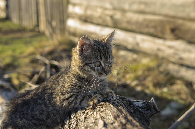 Gatito en la corteza de madera imagenes de archivo