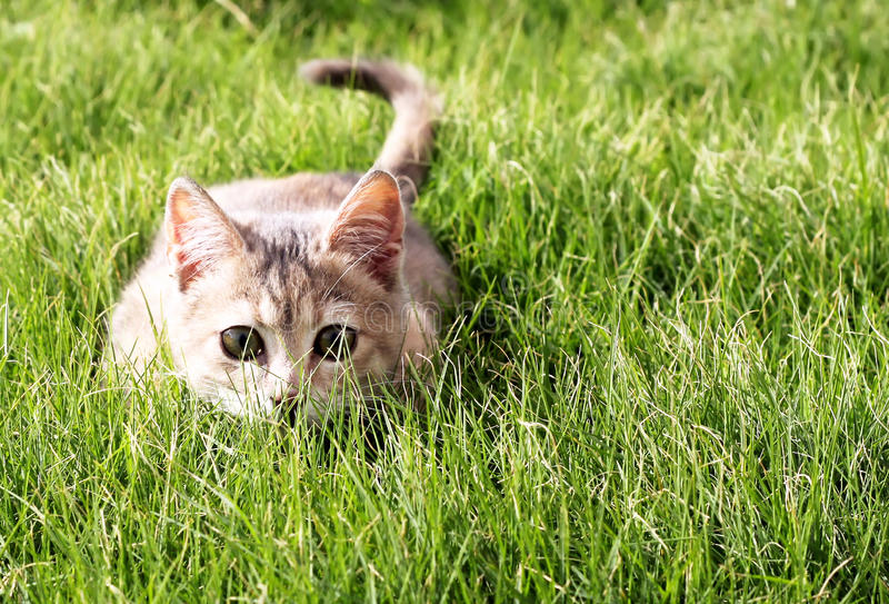 Gatito en la hierba foto de archivo