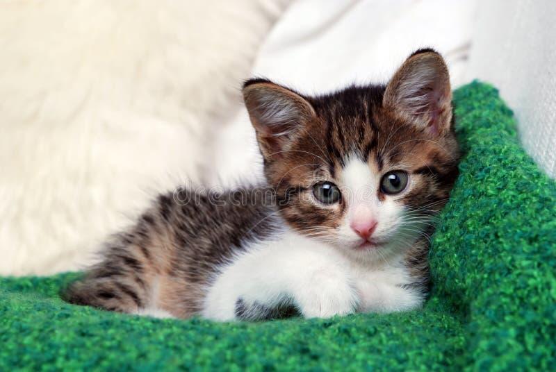 Gatito en la manta verde fotografía de archivo