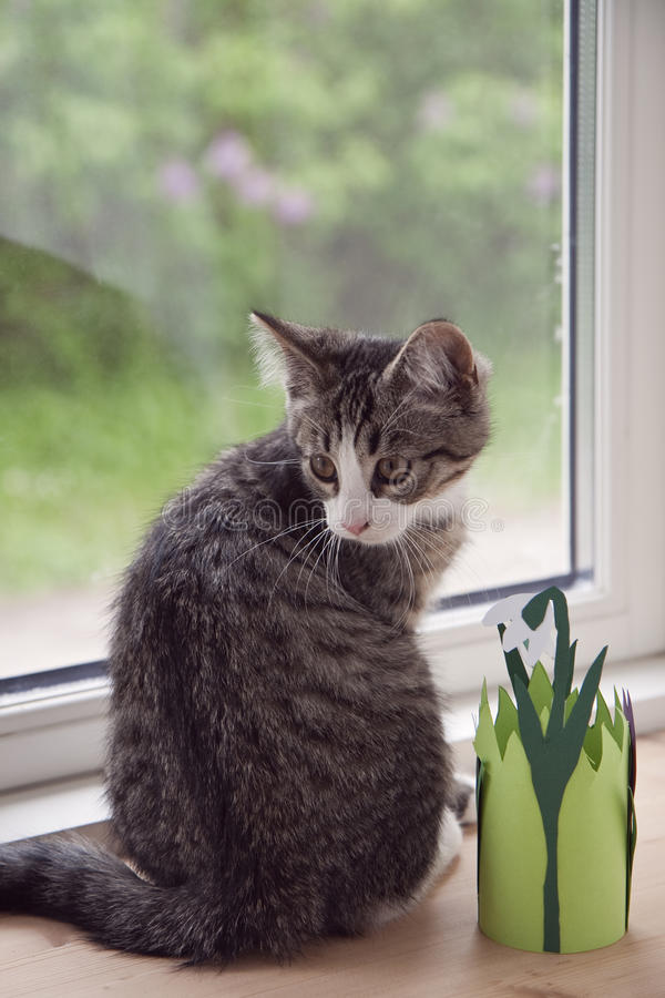 Gatito en la ventana imagen de archivo libre de regalías