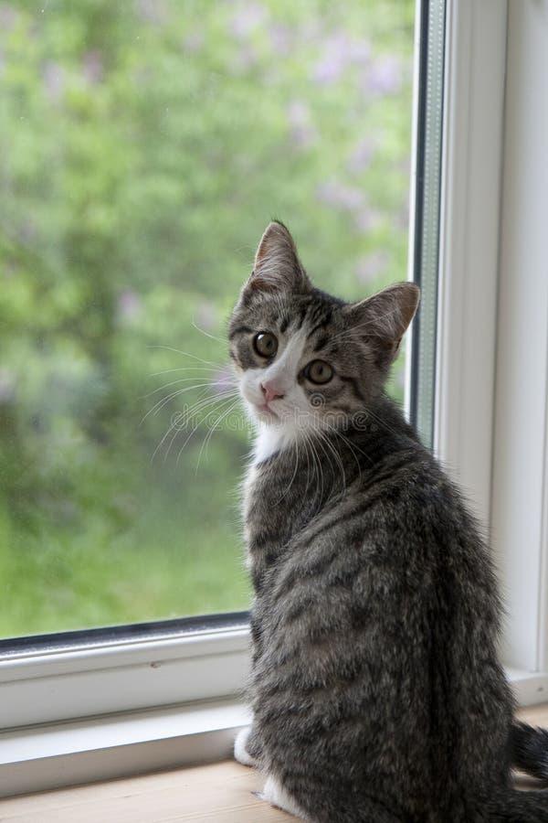 Gatito en la ventana  fotos de archivo