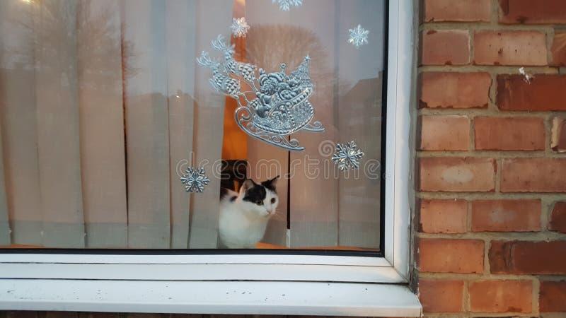 Gatito en la ventana fotografía de archivo libre de regalías
