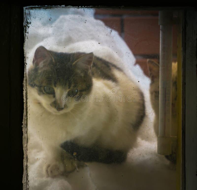 Gatito en pila de la nieve en la ventana imagen de archivo