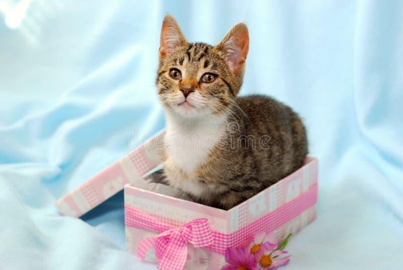 Gatito en rectángulo de regalo foto de archivo libre de regalías