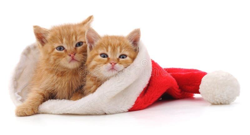 Gatito en sombrero de la Navidad fotografía de archivo libre de regalías