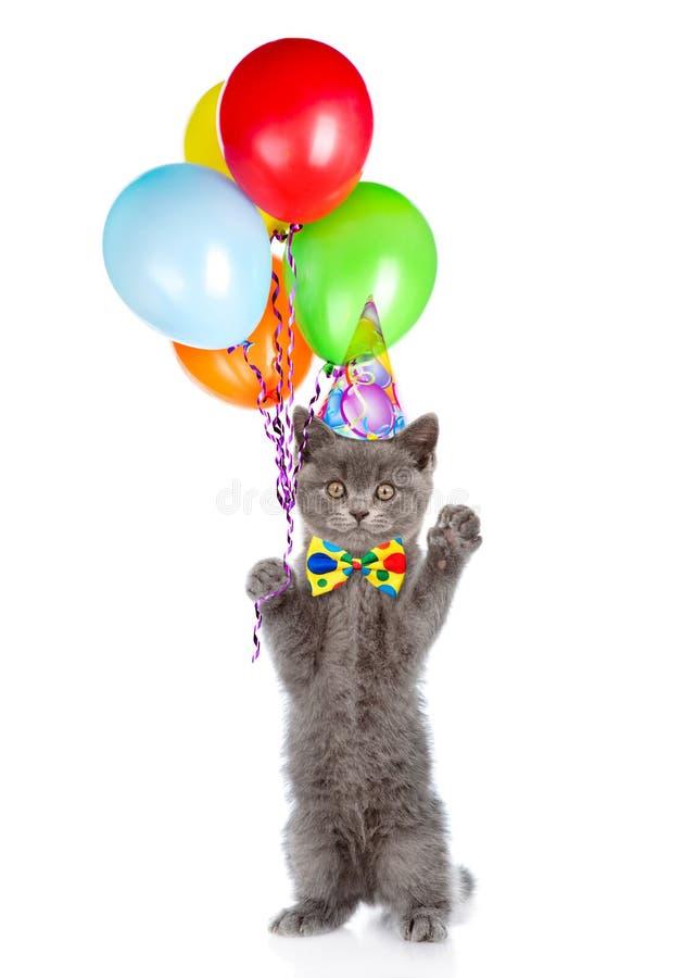 Gatito en sombrero del cumpleaños con el manojo de globos que se colocan en las piernas traseras Aislado en el fondo blanco imagen de archivo