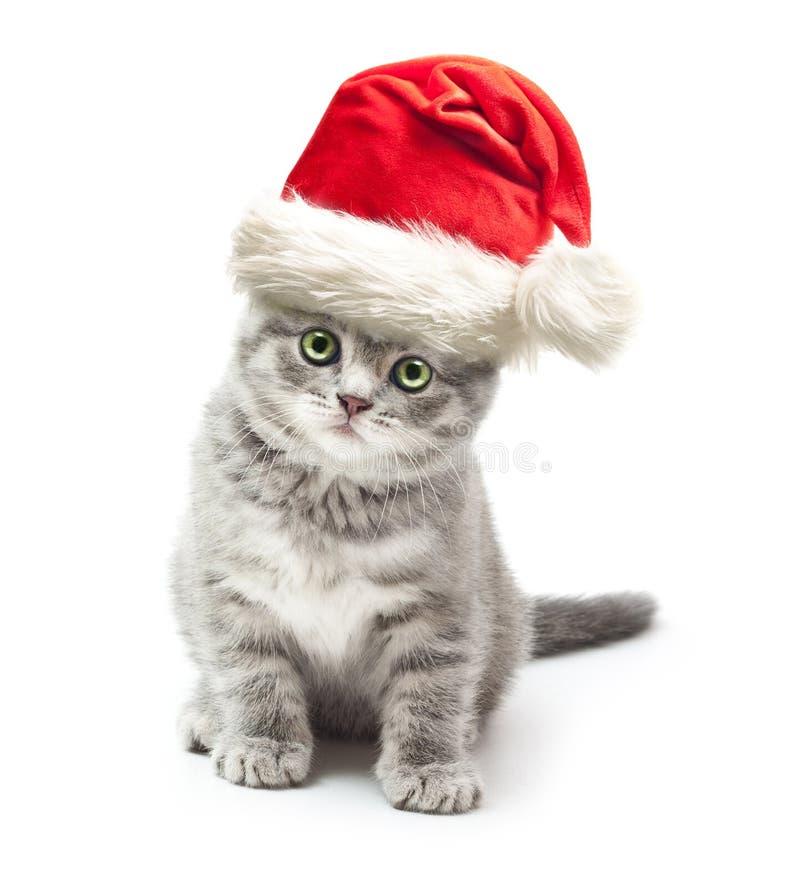 Gatito en sombrero del rojo de Navidad de Santa Claus imagenes de archivo