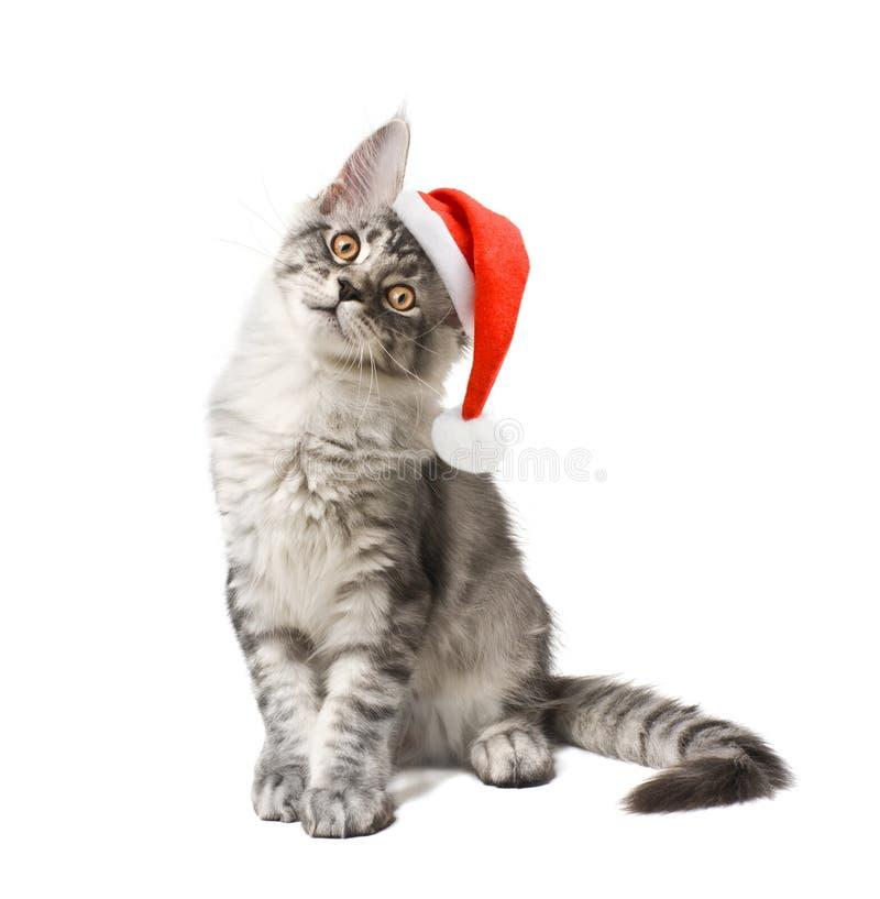 Gatito en sombrero rojo imagenes de archivo