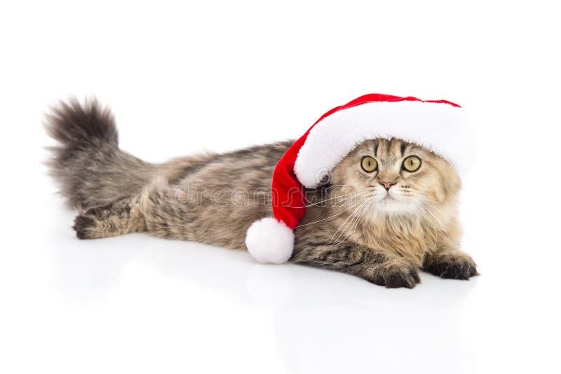 Gatito en sombrero rojo de Navidad de Santa Claus en el fondo blanco foto de archivo libre de regalías