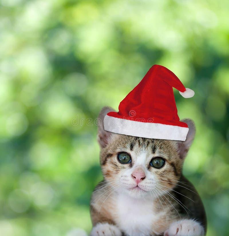 Gatito en sombrero rojo de Navidad de Santa Claus en fondo verde imagen de archivo