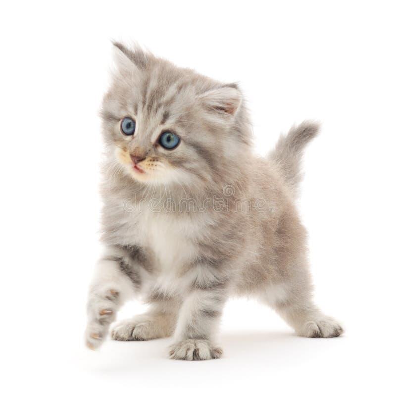 Gatito en un fondo blanco imágenes de archivo libres de regalías