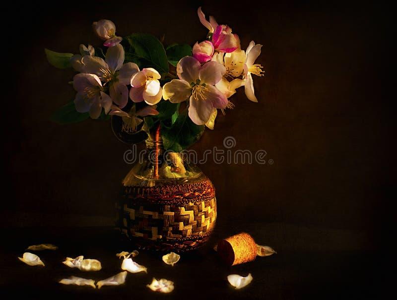 Gatito en un fondo de los flores de la manzana fotografía de archivo