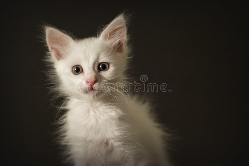 Gatito en un fondo negro fotografía de archivo