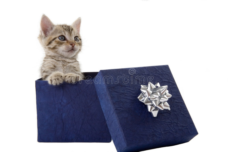 Gatito en un rectángulo de regalo azul imagenes de archivo