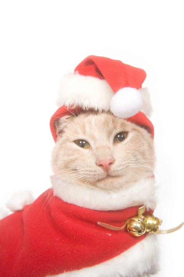 Download Gatito En Un Sombrero De Santa Foto de archivo - Imagen de aislado, gato: 7289394