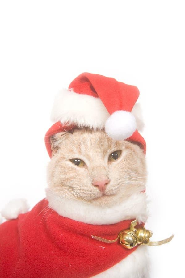 Download Gatito En Un Sombrero De Santa Imagen de archivo - Imagen de sombrero, santa: 7289395