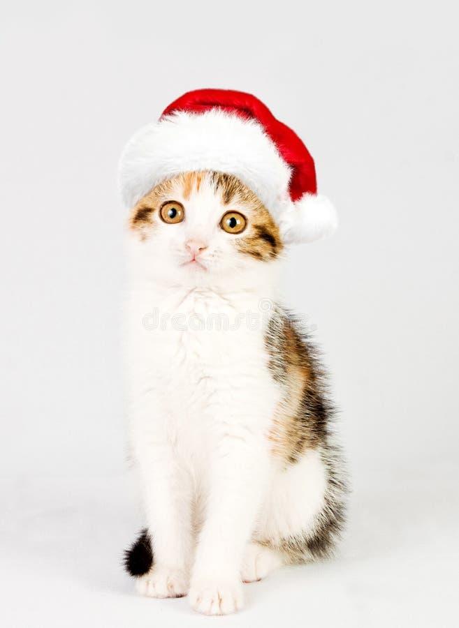 Gatito en un sombrero rojo de santa fotografía de archivo