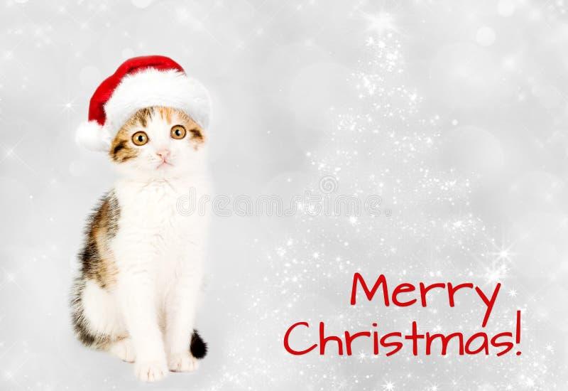 Gatito en un sombrero rojo de santa Feliz Navidad imagen de archivo libre de regalías
