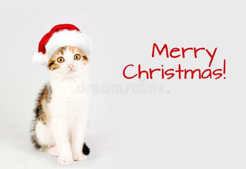 Gatito en un sombrero rojo de santa Feliz Navidad fotos de archivo libres de regalías
