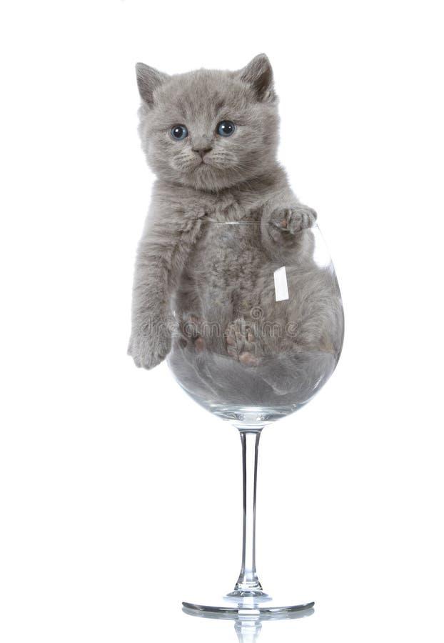 Gatito en un vidrio de vino fotos de archivo
