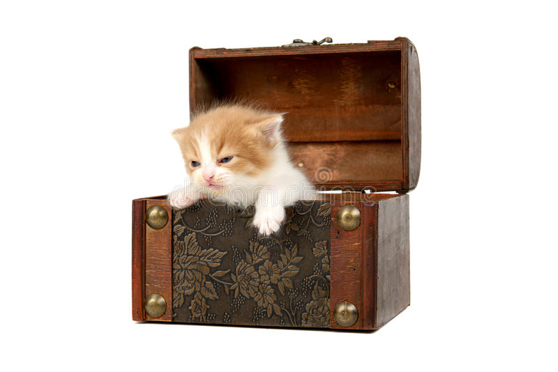 Gatito en una caja fotografía de archivo libre de regalías