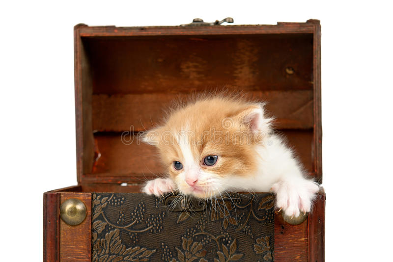 Gatito en una caja imagenes de archivo