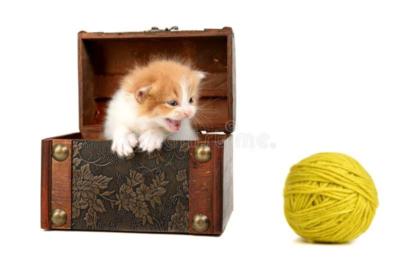 Gatito en una caja imagen de archivo libre de regalías