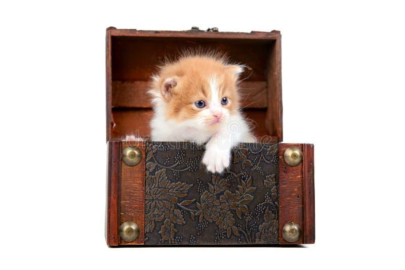 Gatito en una caja fotos de archivo