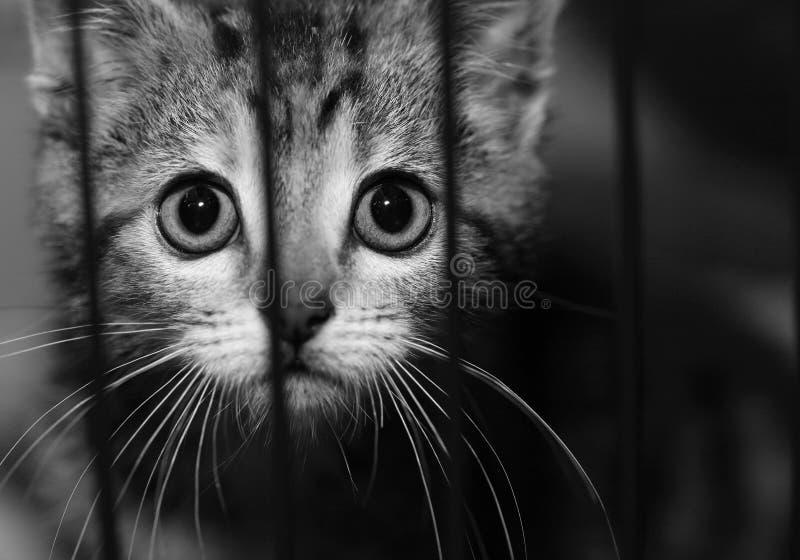 Gatito en una jaula fotografía de archivo libre de regalías