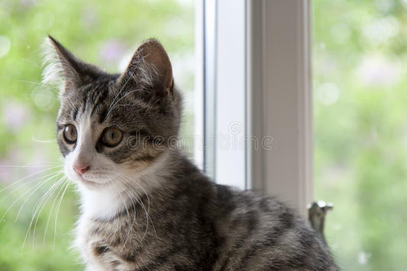 Gatito en una ventana fotos de archivo libres de regalías