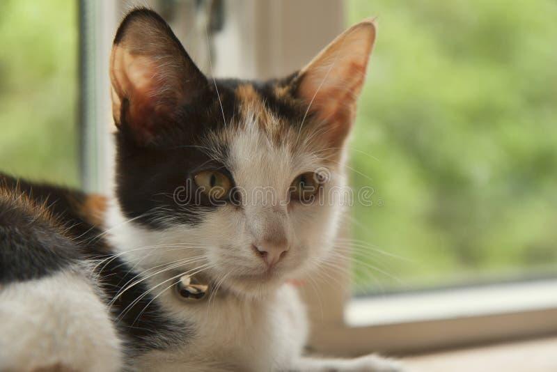 Gatito en una ventana imágenes de archivo libres de regalías
