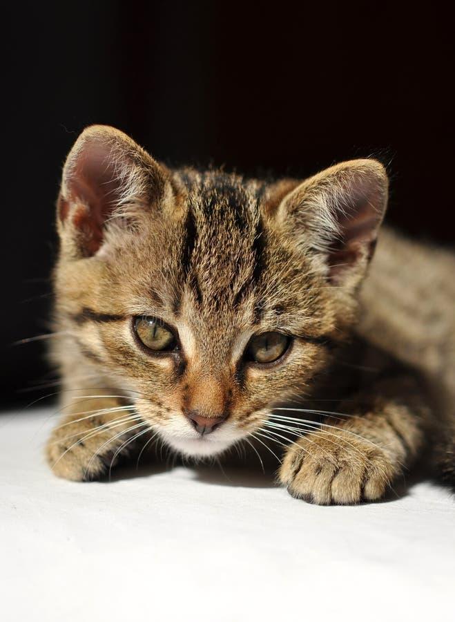 Gatito encantador del tabby imágenes de archivo libres de regalías