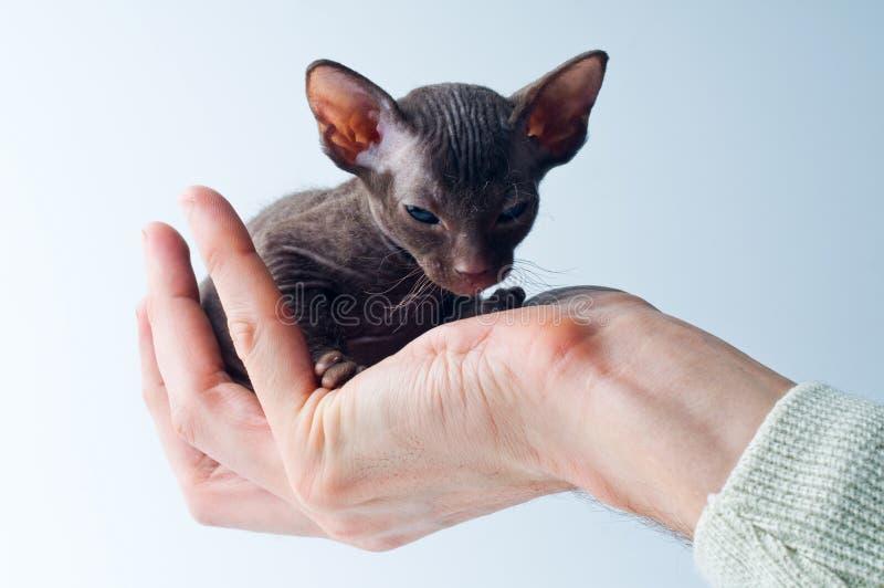Gatito encendido de una palma fotos de archivo libres de regalías
