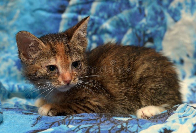 Gatito enfermo en un refugio imagen de archivo libre de regalías