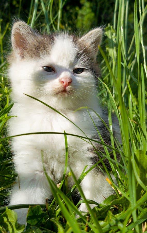 Gatito enojado con hierba fotos de archivo libres de regalías
