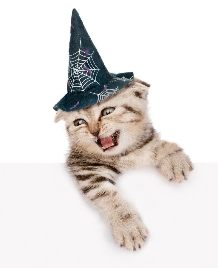 Gatito escocés con el sombrero para Halloween que mira hacia fuera el cartel En el fondo blanco fotos de archivo