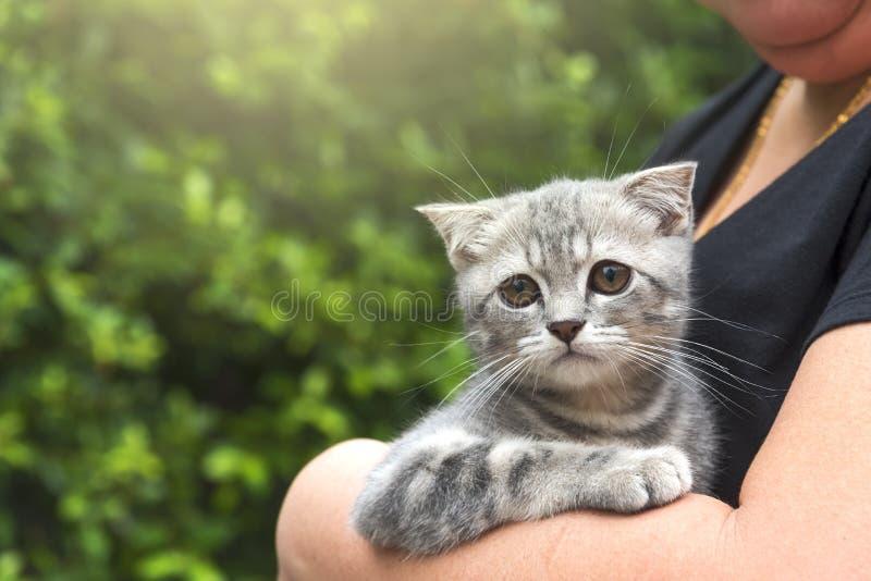 Gatito escocés lindo en abrazo de la mujer imagen de archivo libre de regalías