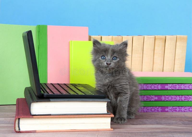 Gatito gris al lado del ordenador portátil miniatura que mira el espectador fotos de archivo libres de regalías