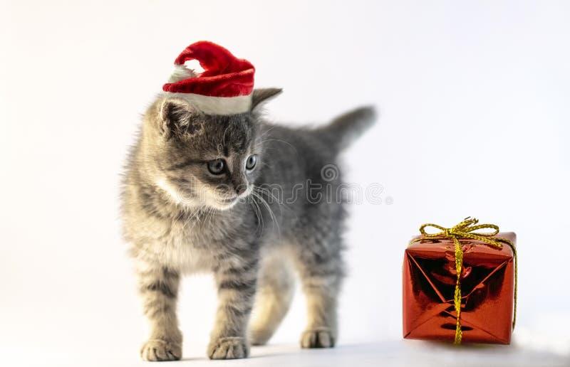 Gatito gris del bebé con la situación del sombrero de Papá Noel fotos de archivo