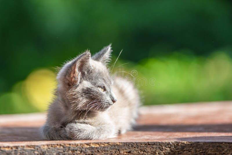 Gatito gris en la hierba en fondo verde borroso en la mañana imagen de archivo libre de regalías